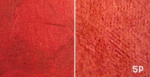 "Color Swatch 5P – ""Scarlet"""